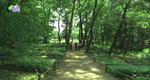 [트래블 메이커] 힐링숲을 찾아서 [05/02]