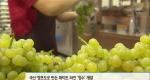 맛과 향 뛰어난 국산 와인 속속 등장 [09/09]