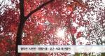 오색찬란 단풍 절정...국립공원 행사 풍성 [10/26]
