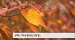 서울 도심 단풍길, 어디로 보러 갈까 [11/01]