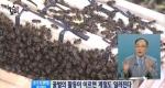 꿀벌이 움직이면 전 세계가 흔들린다 [08/29]