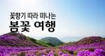 꽃향기 따라 떠나는 '봄꽃 여행'