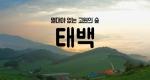 [구석구석 코리아] 제47회 열대야 없는 고원의 숲, 태백