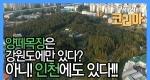 인천에도 양떼목장이?!