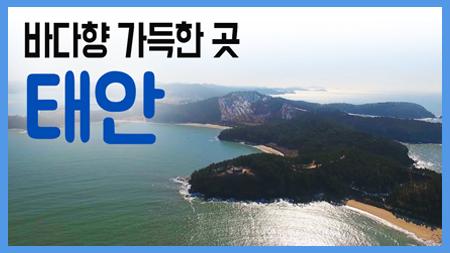 바다향 가득한 태안 / 구석구석 코리아 180회