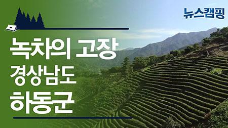 왕의 녹차! 하동녹차의 고장, 경상남도 하동군ㅣ 뉴스캠핑 38회